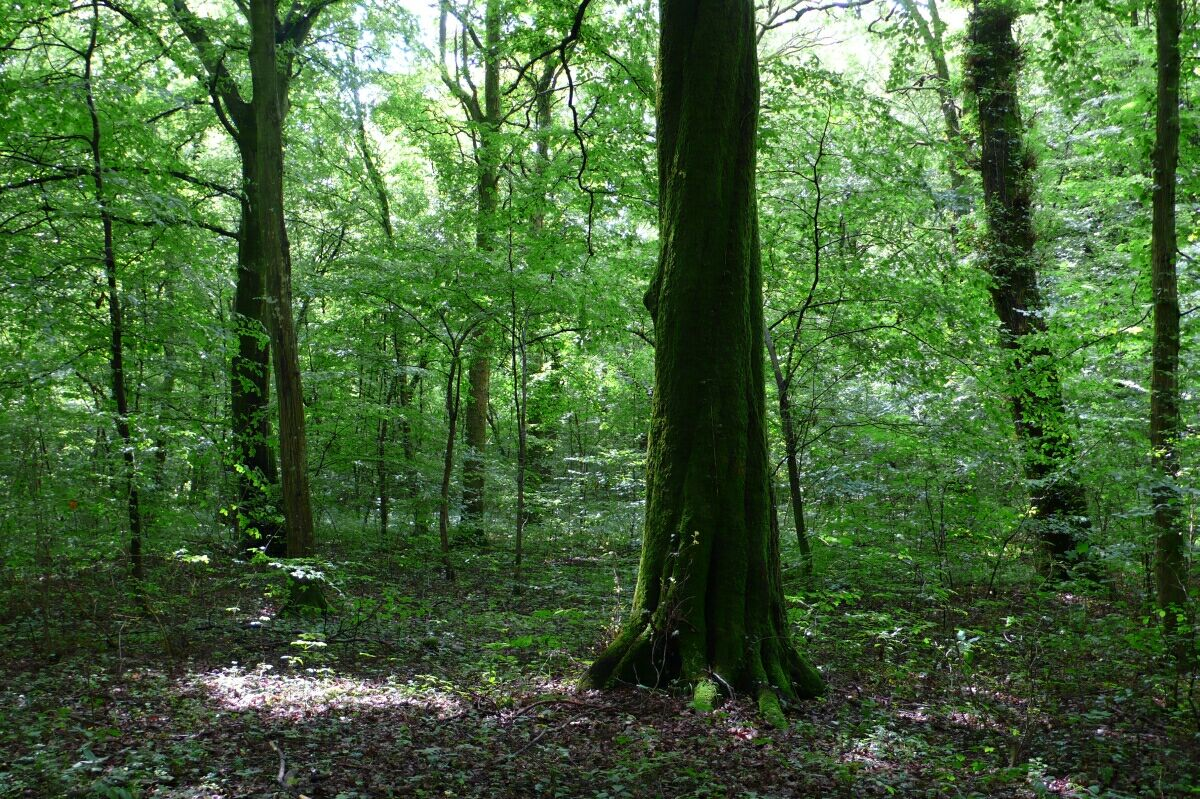 Top Leçon d'arbre | dieudeschats CS37
